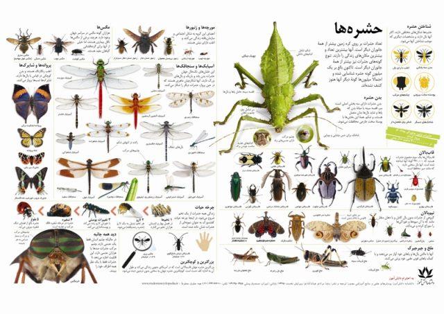 پوستر علمی و آموزشی حشرات