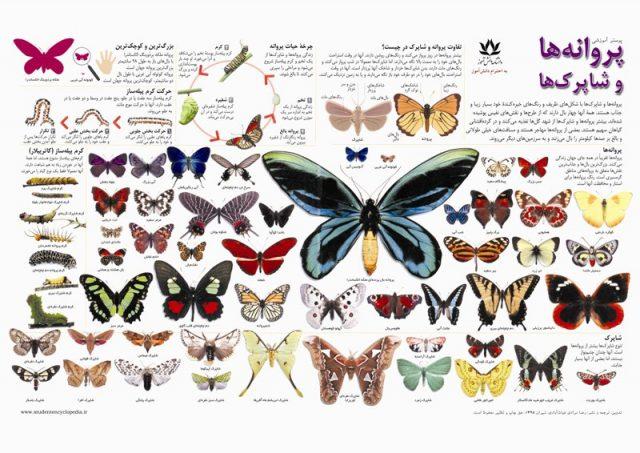 پوستر زیبای پروانه ها و شاپرک ها