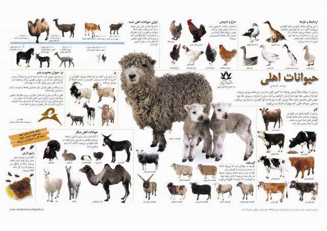پوستر آشنایی با حیوانات اهلی