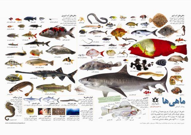 پوستر آموزشی ماهی ها/ ماهیان