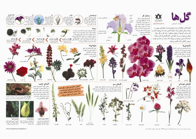 پوستر مدرسه آشنایی با گل ها