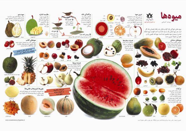 پوستر آشنایی با میوه ها