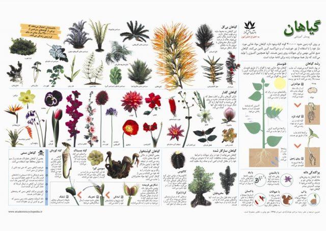 پوستر آموزشی گیاهان