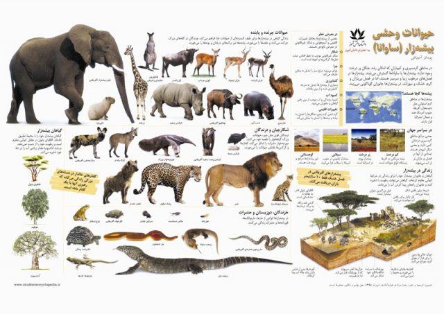 پوستر آشنایی با حیوانات وحشی بیشه زار (ساوانا)
