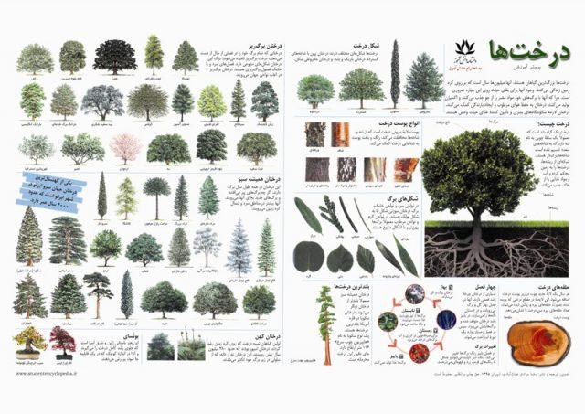 پوستر علمی درخت ها/ درختان