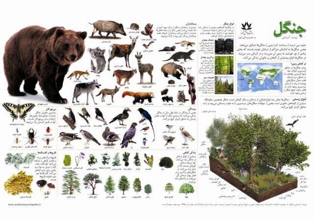 پوستر چارت آموزشی جنگل و حیوانات جنگلی