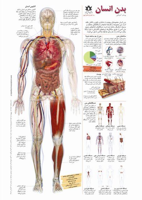 پوستر آموزشی آناتومی و بدن انسان
