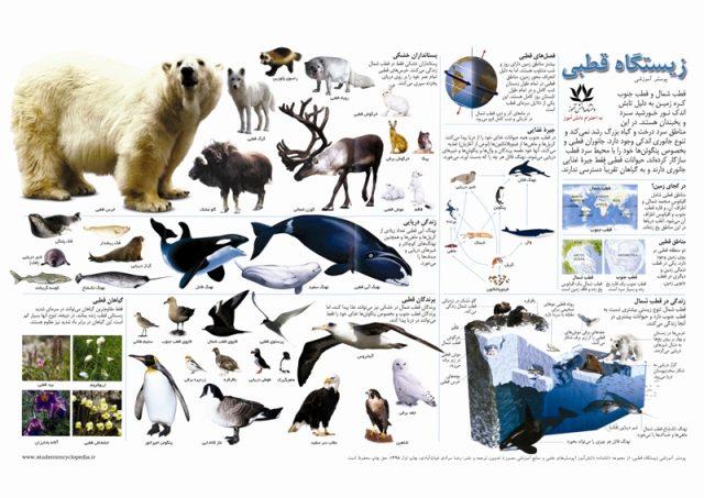 چارت آموزشی زیستگاه قطبی