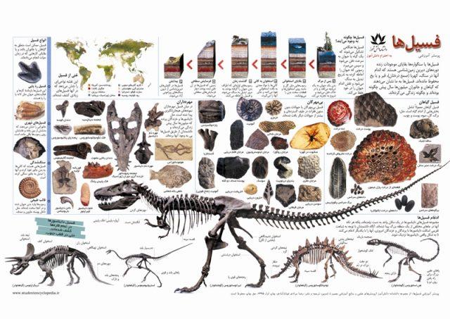 پوستر فسیل ها برای دیرین شناسی