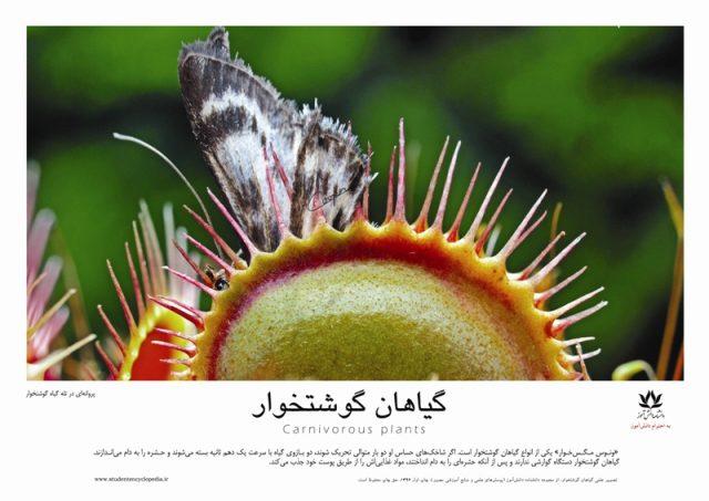 تصویر علمی گیاهان گوشتخوار و ونوس مگس خوار