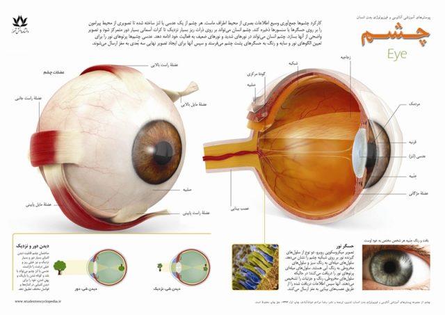 پوستر چشم انسان