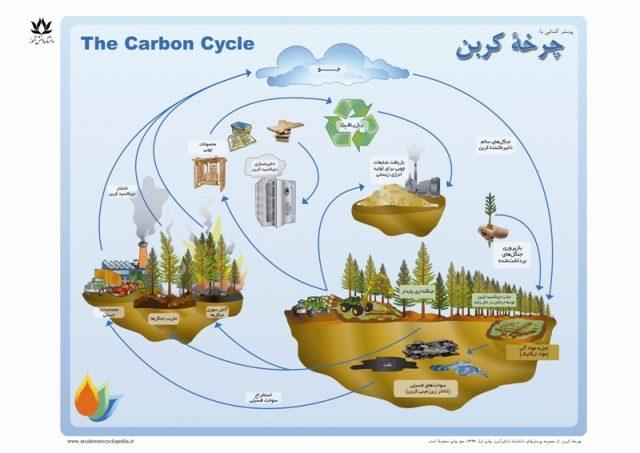 پوستر چرخه کربن