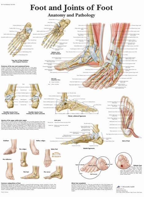 پوستر آناتومی و پاتولوژی پا و مفاصل پا