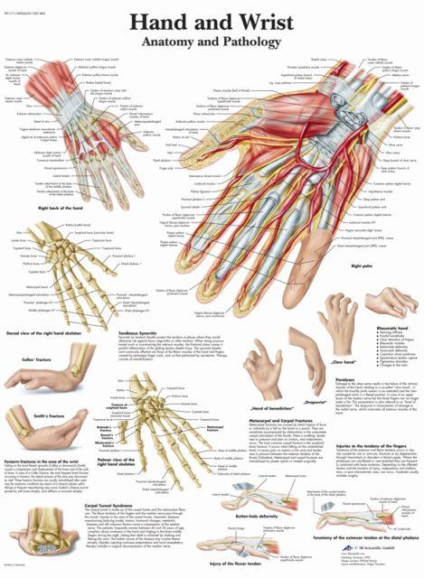 پوستر آناتومی و پاتولوژی دست و مفاصل دست و انگشتان