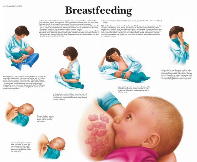 پوستر آموزشی شیردهی یا شیر دادن به کودک و نوزاد