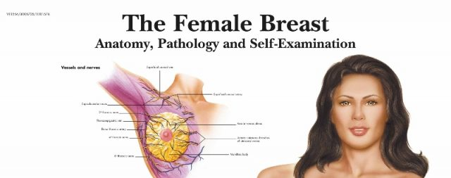 پوستر تخصصی و پزشکی پستان زنان - The Female Breast Poster