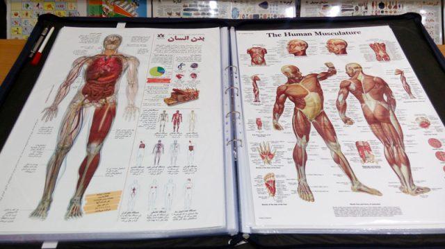 مجموعه پوستر آموزشی اندازه متوسط