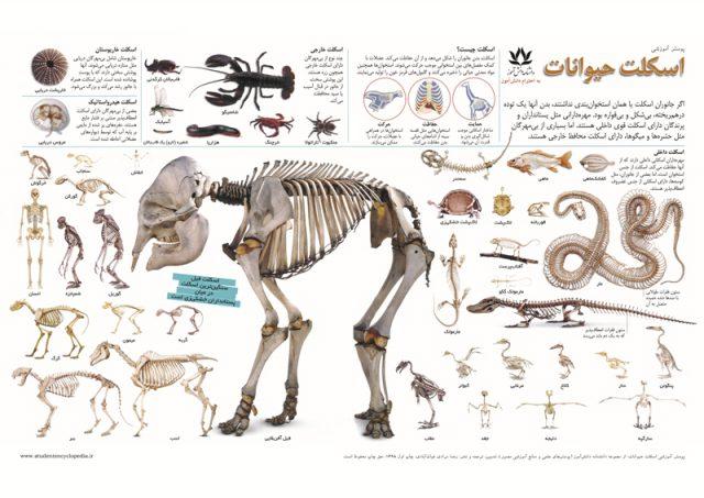 پوستر آموزشی اسکلت حیوانات یا جانوران