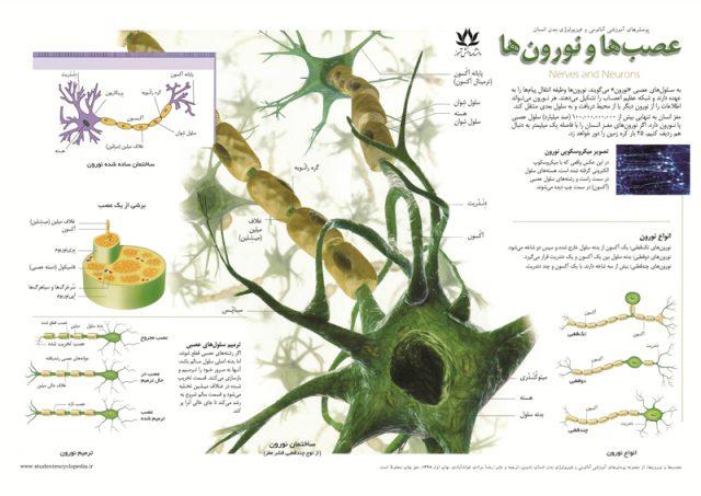 پوستر عصب و نورون و آکسون