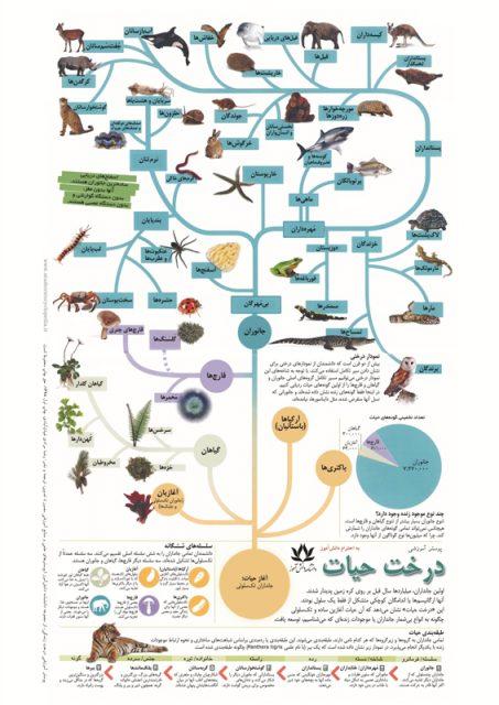 پوستر آموزشی درخت حیات برای درس زیست شناسی