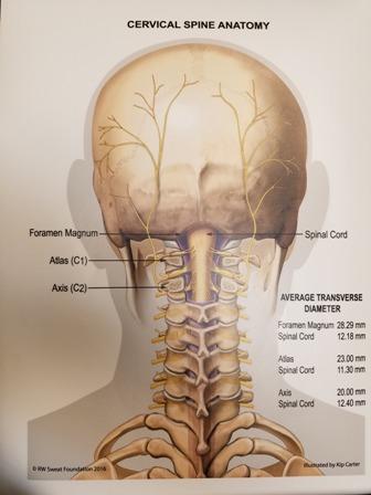 پوستر آناتومی ستون فقرات گردنی