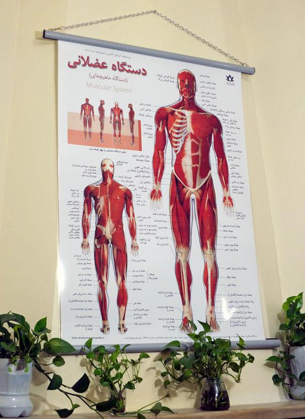 انتخاب و خرید پوستر آناتومی و آموزشی